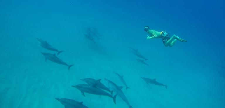 thegoldfishescapades_dolphins_oahu