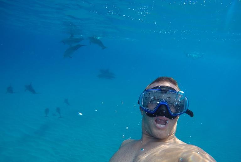 thegoldfishescapades_dolphins_oahu1